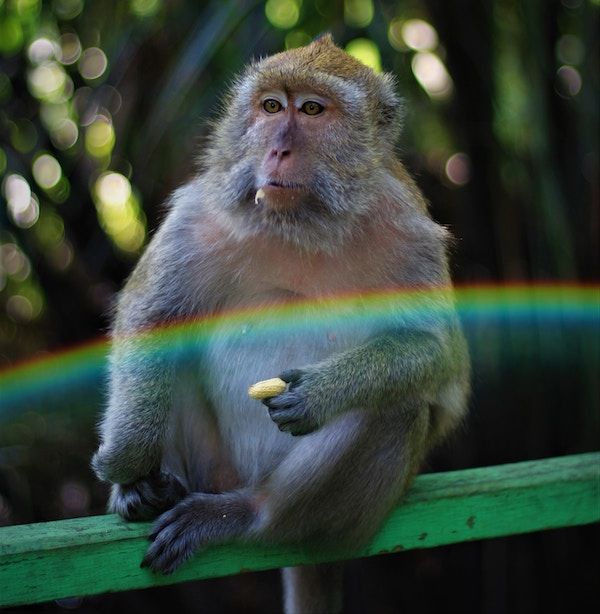 monkey thinking picture