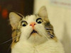 cat face shocked